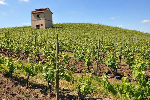 Les vins de la madonne