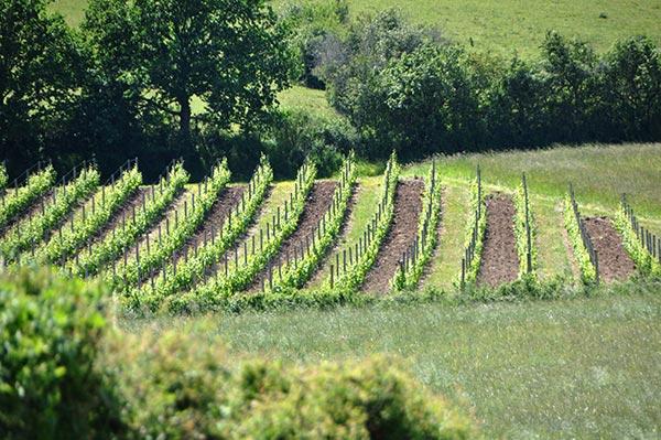 Les vins de la madone